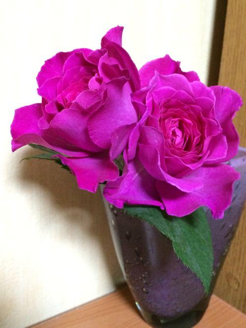 花ギフト|フラワーギフト|誕生日 花|カノシェ話題|スタンド花|ウエディングブーケ|花束|花屋|IMG_3300