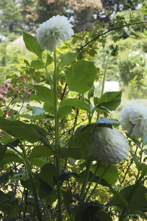 花ギフト|フラワーギフト|誕生日 花|カノシェ話題|スタンド花|ウエディングブーケ|花束|花屋|P8130129
