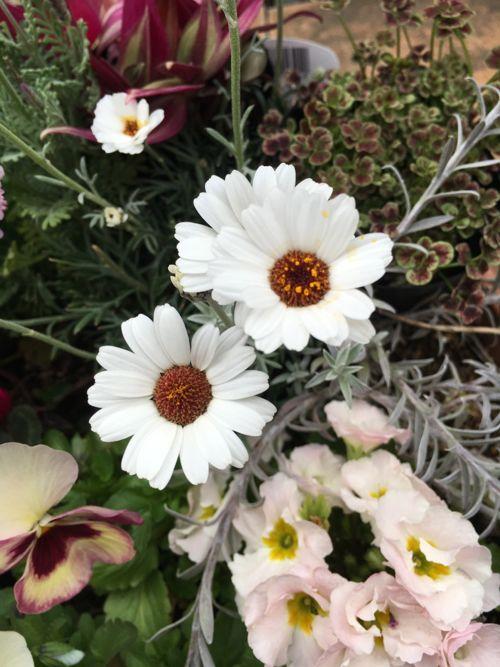 花ギフト|フラワーギフト|誕生日 花|カノシェ話題|スタンド花|ウエディングブーケ|花束|花屋|IMG_0105