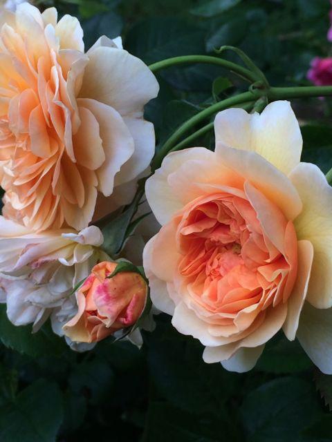花ギフト|フラワーギフト|誕生日 花|カノシェ話題|スタンド花|ウエディングブーケ|花束|花屋|IMG_1476