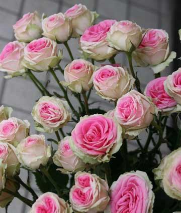 花ギフト|フラワーギフト|誕生日 花|カノシェ話題|スタンド花|ウエディングブーケ|花束|花屋|ミミエデン