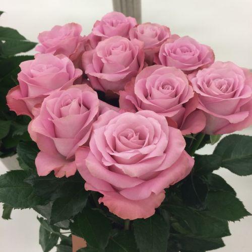 花ギフト|フラワーギフト|誕生日 花|カノシェ話題|スタンド花|ウエディングブーケ|花束|花屋|IMG_7105