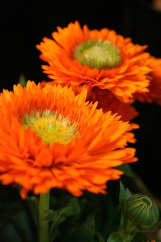 花ギフト フラワーギフト 誕生日 花 カノシェ話題 スタンド花 ウエディングブーケ 花束 花屋 sokaensan