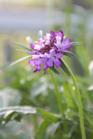 花ギフト|フラワーギフト|誕生日 花|カノシェ話題|スタンド花|ウエディングブーケ|花束|花屋|スカビ紫