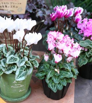 花ギフト|フラワーギフト|誕生日 花|カノシェ話題|スタンド花|ウエディングブーケ|花束|花屋|IMG_9987