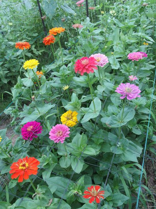 花ギフト|フラワーギフト|誕生日 花|カノシェ話題|スタンド花|ウエディングブーケ|花束|花屋|P8150193