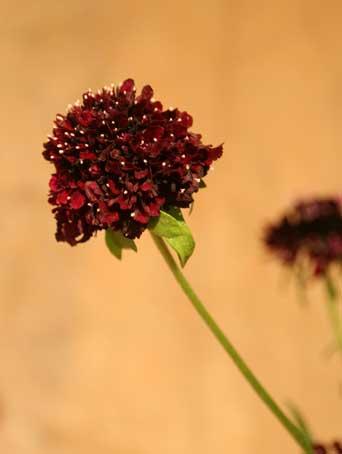 花ギフト|フラワーギフト|誕生日 花|カノシェ話題|スタンド花|ウエディングブーケ|花束|花屋|スカビ2