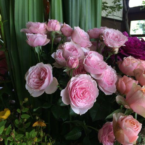 花ギフト|フラワーギフト|誕生日 花|カノシェ話題|スタンド花|ウエディングブーケ|花束|花屋|IMG_5621