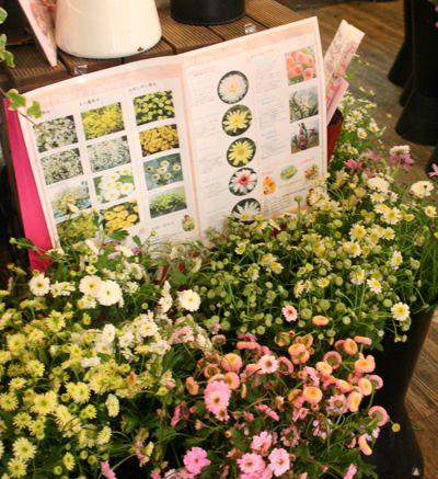 花ギフト|フラワーギフト|誕生日 花|カノシェ話題|スタンド花|ウエディングブーケ|花束|花屋|IMG_6951