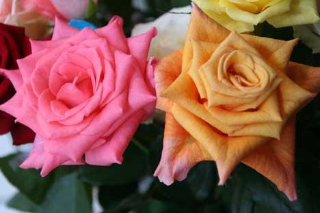 花ギフト|フラワーギフト|誕生日 花|カノシェ話題|スタンド花|ウエディングブーケ|花束|花屋|ミーシャ