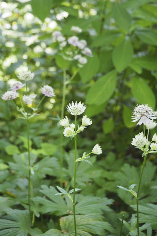 花ギフト|フラワーギフト|誕生日 花|カノシェ話題|スタンド花|ウエディングブーケ|花束|花屋|P8130143
