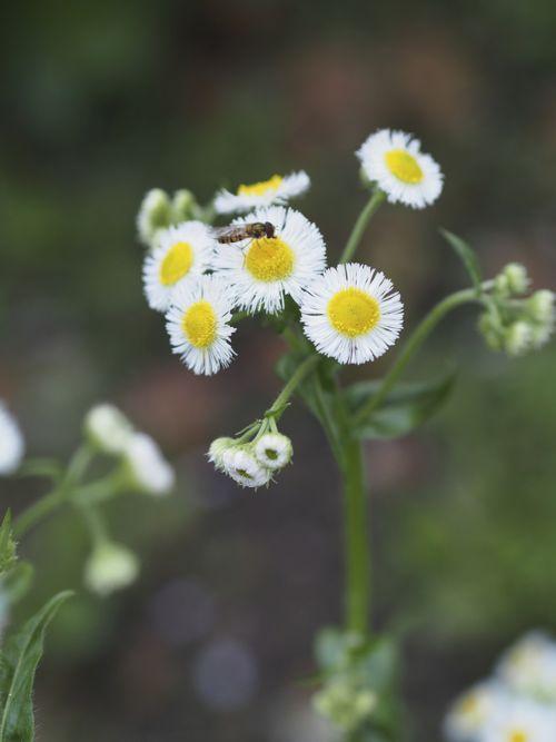 花ギフト|フラワーギフト|誕生日 花|カノシェ話題|スタンド花|ウエディングブーケ|花束|花屋|P1010489