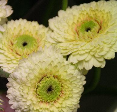 花ギフト|フラワーギフト|誕生日 花|カノシェ話題|スタンド花|ウエディングブーケ|花束|花屋|カーミット