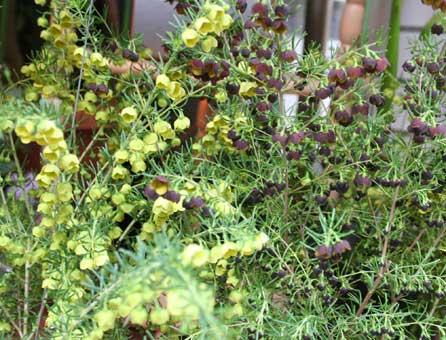 花ギフト|フラワーギフト|誕生日 花|カノシェ話題|スタンド花|ウエディングブーケ|花束|花屋|ボロニア