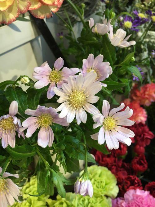 花ギフト|フラワーギフト|誕生日 花|カノシェ話題|スタンド花|ウエディングブーケ|花束|花屋|IMG_0478