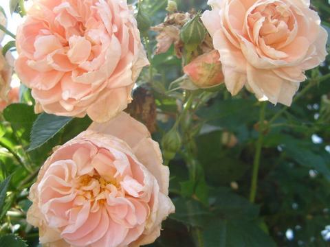 花ギフト|フラワーギフト|誕生日 花|カノシェ話題|スタンド花|ウエディングブーケ|花束|花屋|6bce
