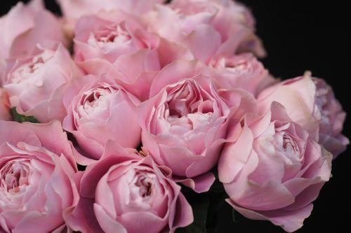 花ギフト|フラワーギフト|誕生日 花|カノシェ話題|スタンド花|ウエディングブーケ|花束|花屋|IMG_8670