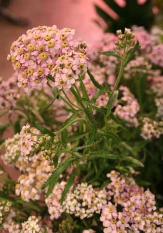 花ギフト|フラワーギフト|誕生日 花|カノシェ話題|スタンド花|ウエディングブーケ|花束|花屋|アキレア