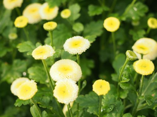 花ギフト|フラワーギフト|誕生日 花|カノシェ話題|スタンド花|ウエディングブーケ|花束|花屋|P1010181