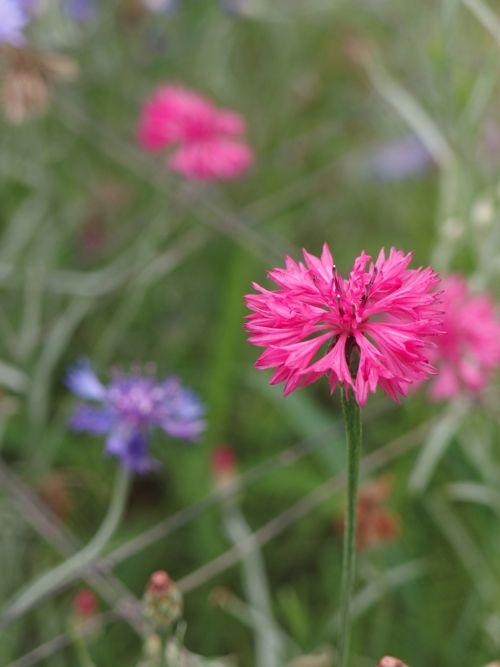 花ギフト|フラワーギフト|誕生日 花|カノシェ話題|スタンド花|ウエディングブーケ|花束|花屋|P8150154