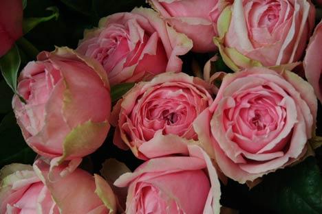 花ギフト|フラワーギフト|誕生日 花|カノシェ話題|スタンド花|ウエディングブーケ|花束|花屋|fansi-doresu