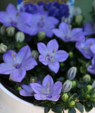 花ギフト|フラワーギフト|誕生日 花|カノシェ話題|スタンド花|ウエディングブーケ|花束|花屋|IMG_8336