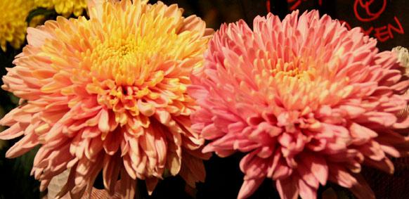 花ギフト フラワーギフト 誕生日 花 カノシェ話題 スタンド花 ウエディングブーケ 花束 花屋 IMG_0178