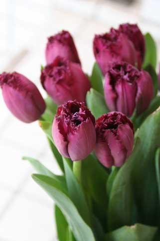 花ギフト|フラワーギフト|誕生日 花|カノシェ話題|スタンド花|ウエディングブーケ|花束|花屋|紫リップ