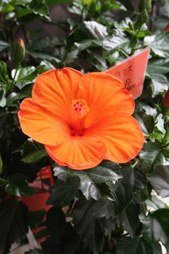 花ギフト|フラワーギフト|誕生日 花|カノシェ話題|スタンド花|ウエディングブーケ|花束|花屋|ore
