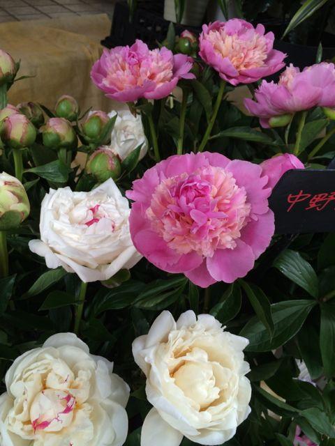 花ギフト|フラワーギフト|誕生日 花|カノシェ話題|スタンド花|ウエディングブーケ|花束|花屋|IMG_1394