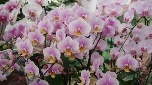 花ギフト|フラワーギフト|誕生日 花|カノシェ話題|スタンド花|ウエディングブーケ|花束|花屋|P1011008