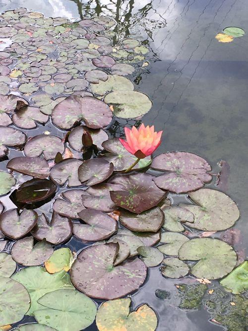 花ギフト|フラワーギフト|誕生日 花|カノシェ話題|スタンド花|ウエディングブーケ|花束|花屋|IMG_1678