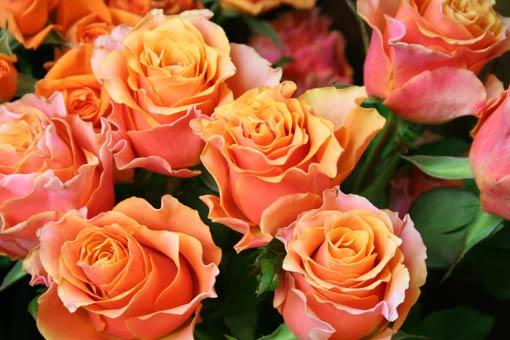 花ギフト|フラワーギフト|誕生日 花|カノシェ話題|スタンド花|ウエディングブーケ|花束|花屋|orange-rose