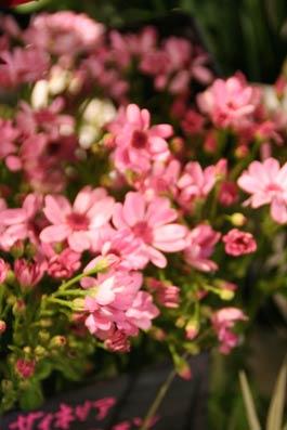 花ギフト|フラワーギフト|誕生日 花|カノシェ話題|スタンド花|ウエディングブーケ|花束|花屋|IMG_6166