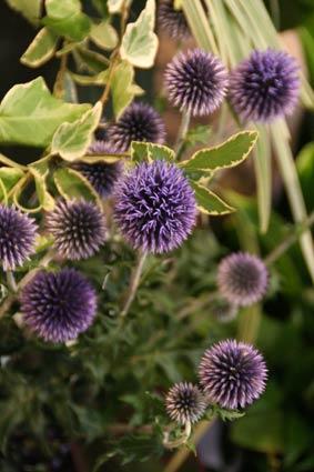 花ギフト|フラワーギフト|誕生日 花|カノシェ話題|スタンド花|ウエディングブーケ|花束|花屋|IMG_8333