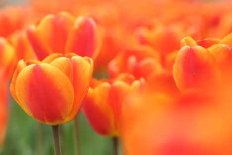 花ギフト|フラワーギフト|誕生日 花|カノシェ話題|スタンド花|ウエディングブーケ|花束|花屋|リップオレンジ