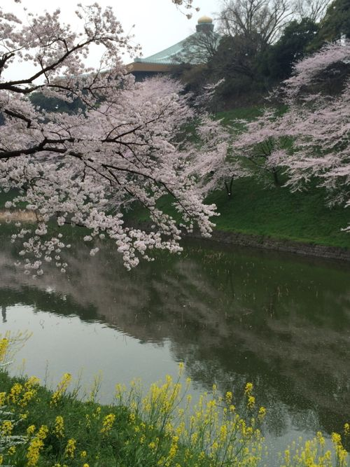 花ギフト|フラワーギフト|誕生日 花|カノシェ話題|スタンド花|ウエディングブーケ|花束|花屋|IMG_7679
