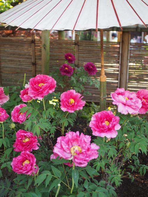 花ギフト|フラワーギフト|誕生日 花|カノシェ話題|スタンド花|ウエディングブーケ|花束|花屋|P1010678