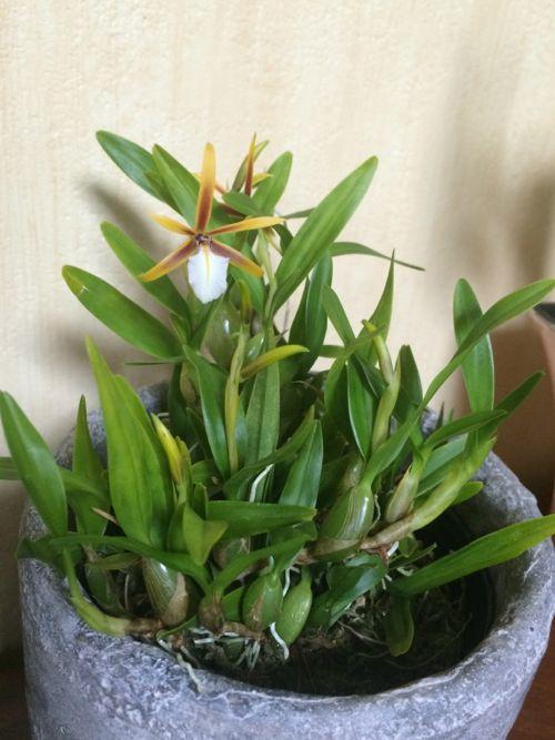 花ギフト|フラワーギフト|誕生日 花|カノシェ話題|スタンド花|ウエディングブーケ|花束|花屋|IMG_9490