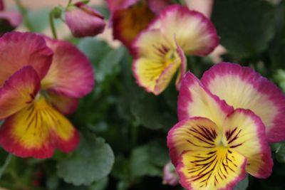 花ギフト|フラワーギフト|誕生日 花|カノシェ話題|スタンド花|ウエディングブーケ|花束|花屋|IMG_5542