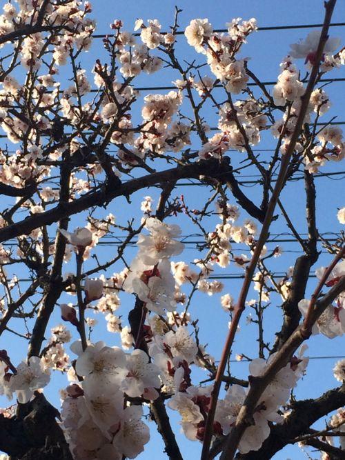 花ギフト|フラワーギフト|誕生日 花|カノシェ話題|スタンド花|ウエディングブーケ|花束|花屋|IMG_9744