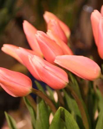 花ギフト|フラワーギフト|誕生日 花|カノシェ話題|スタンド花|ウエディングブーケ|花束|花屋|ガブリエラ