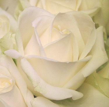 花ギフト|フラワーギフト|誕生日 花|カノシェ話題|スタンド花|ウエディングブーケ|花束|花屋|abaranche