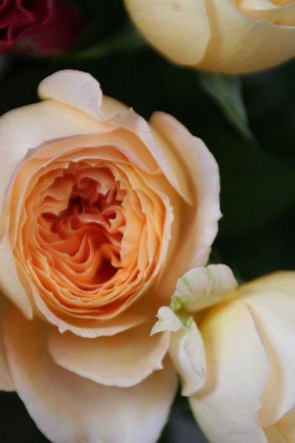 花ギフト|フラワーギフト|誕生日 花|カノシェ話題|スタンド花|ウエディングブーケ|花束|花屋|IMG_0215