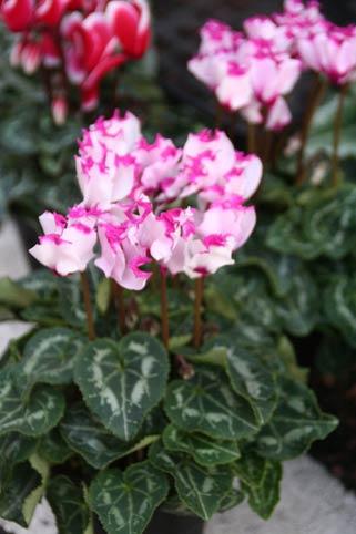 花ギフト|フラワーギフト|誕生日 花|カノシェ話題|スタンド花|ウエディングブーケ|花束|花屋|IMG_9981