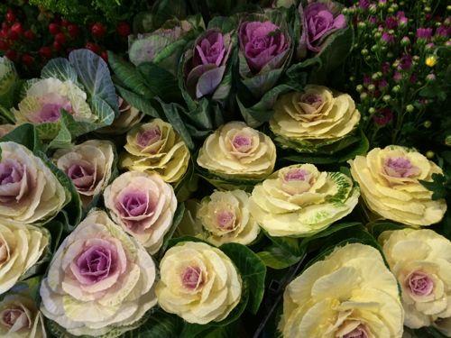 花ギフト|フラワーギフト|誕生日 花|カノシェ話題|スタンド花|ウエディングブーケ|花束|花屋|IMG_8650
