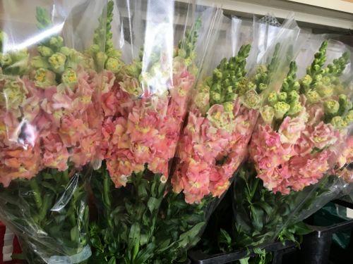 花ギフト|フラワーギフト|誕生日 花|カノシェ話題|スタンド花|ウエディングブーケ|花束|花屋|IMG_0974