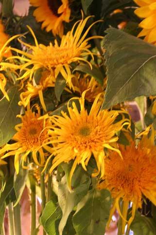 花ギフト|フラワーギフト|誕生日 花|カノシェ話題|スタンド花|ウエディングブーケ|花束|花屋|ひま3