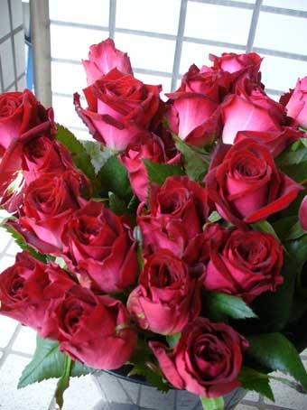 花ギフト|フラワーギフト|誕生日 花|カノシェ話題|スタンド花|ウエディングブーケ|花束|花屋|ルビ-レッド