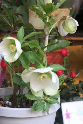 花ギフト|フラワーギフト|誕生日 花|カノシェ話題|スタンド花|ウエディングブーケ|花束|花屋|xmassiro